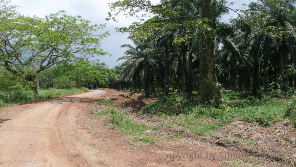 Borneo - Tabin Wildlife Reserve