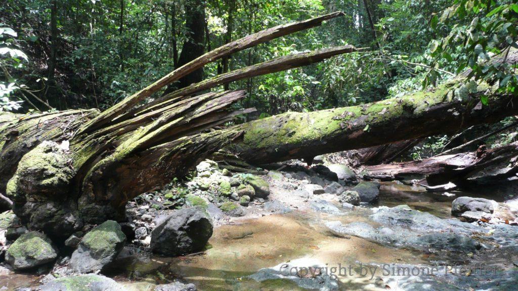 Danum Valley - tropischer Regenwald