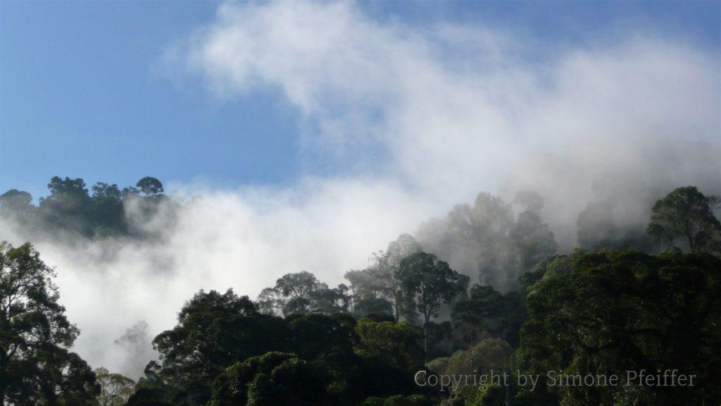 Borneo, Danum Valley, ein neuer Tag beginnt im tropischen Tieflandregenwald.