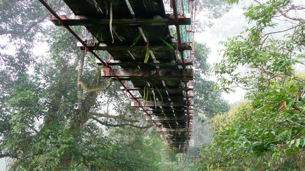Der Canopy Walkway führt fast 300 m durch verschiedene Baumetagen bis auf eine Höhe von 26 Metern über dem Boden. Der höchste Baum ist ein Urat Mata.