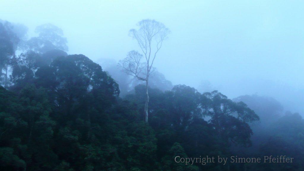 Die Morgendämmerung im tropischen Regenwald ist kurz.