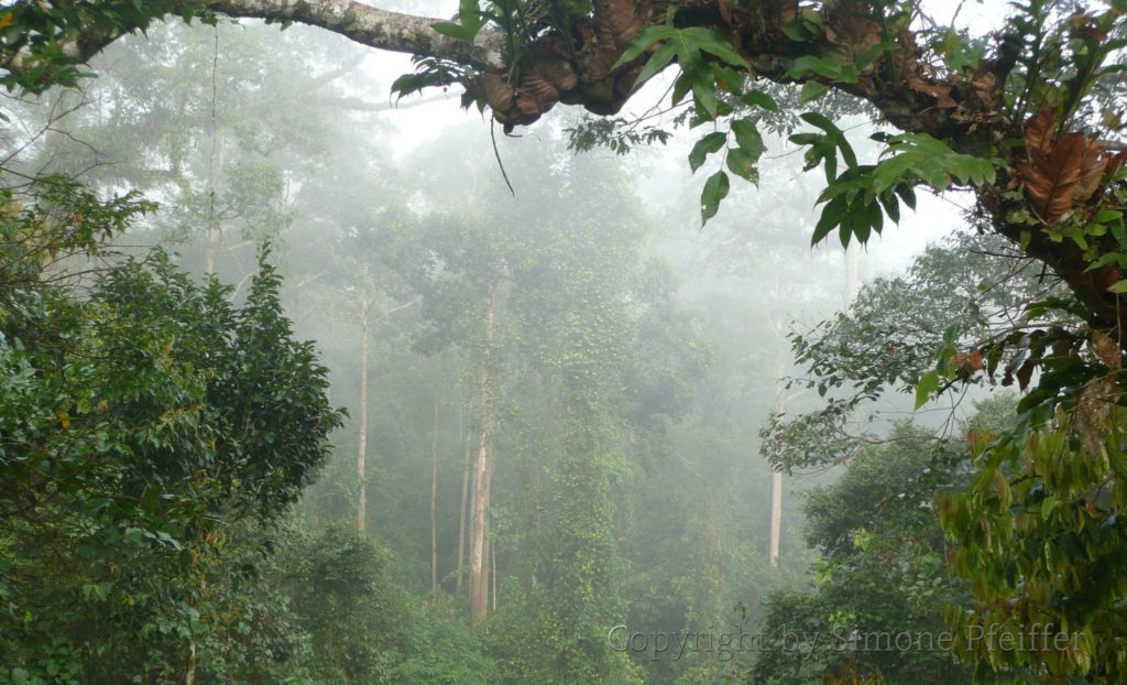 Borneo, Danum Valley