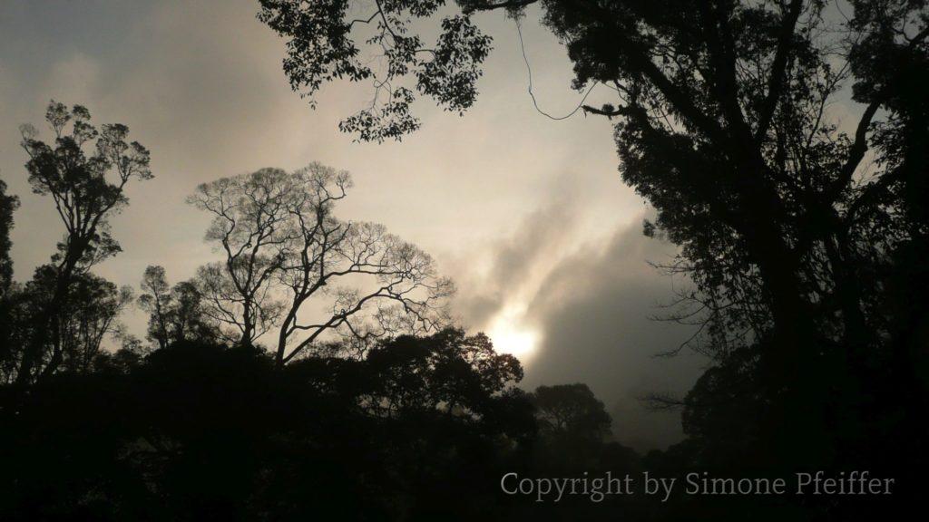 Borneo - Danum Valley - Abendstimmung im tropischen Regenwald.