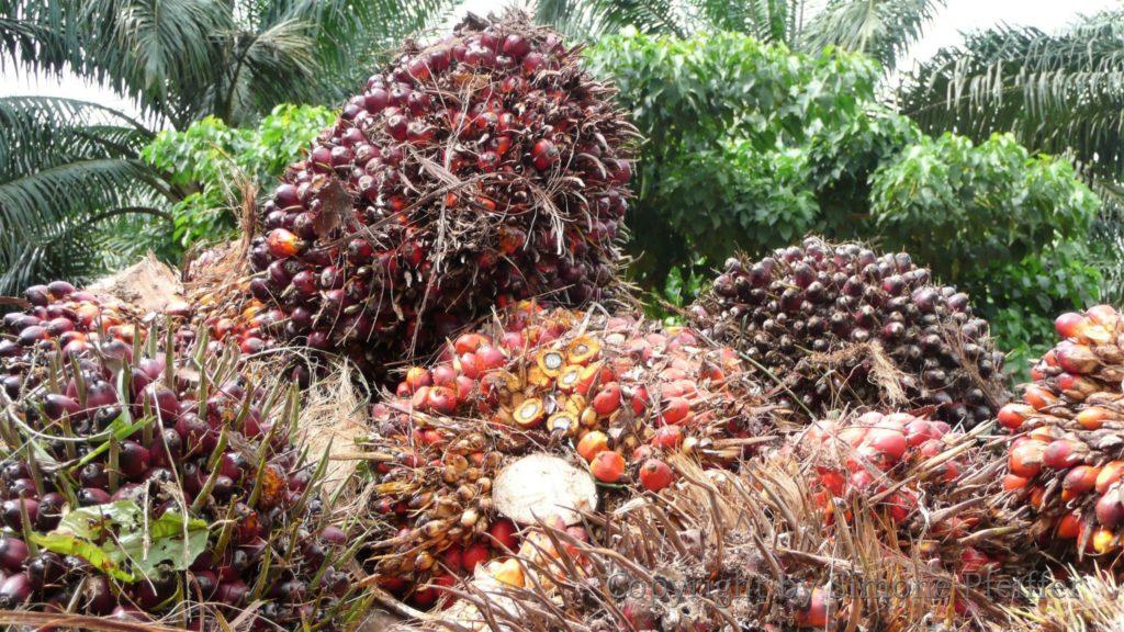Deutschland kaufte 2016 1,34 Mio. Tonnen Palmöl in Malaysia. Palmöl wird außer in der Kosmetik und Lebensmittelindustrie auch dem Bio-Sprit beigemischt.