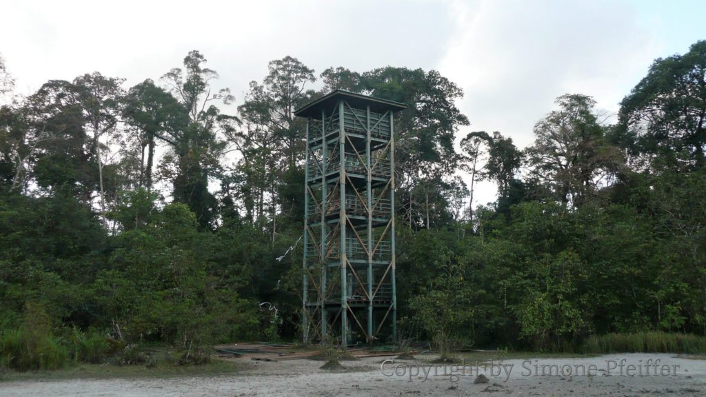 Borneo - Tabin - Lipad Mud Volcano - Watchtower - www.explorations-travel.com