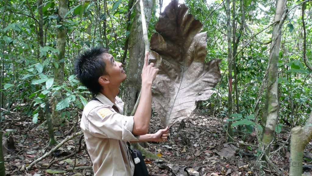 Borneo, Tabin Wildlife Reserve