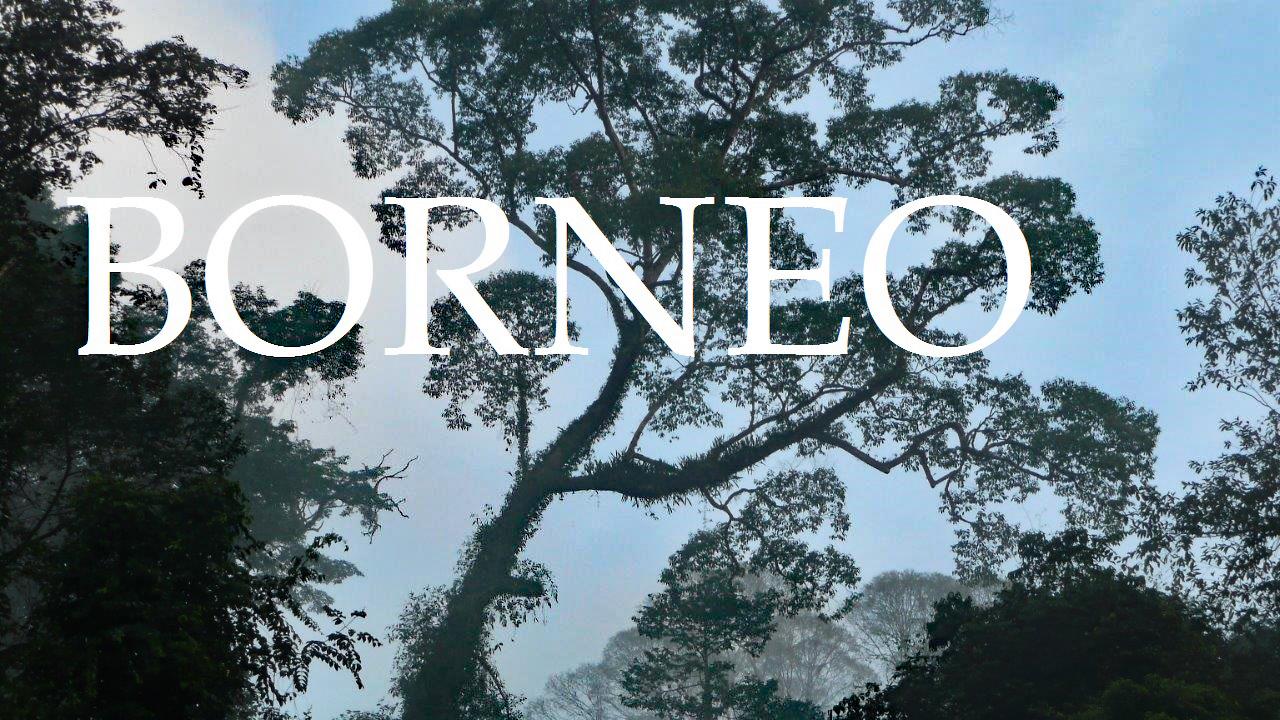 Borneo Bild zum YouTube Video